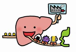 肝臓の数値が悪い