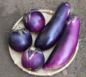 紫の野菜 なす