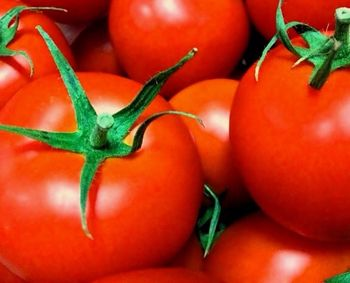 赤い野菜 トマト